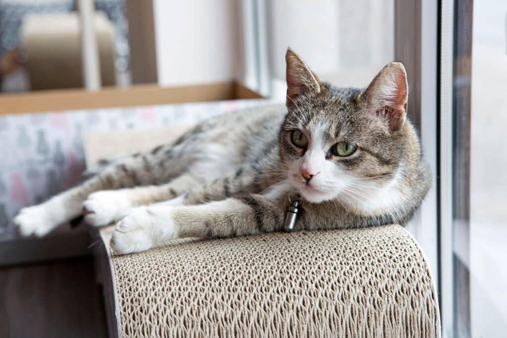 Koty w Kot Cafe