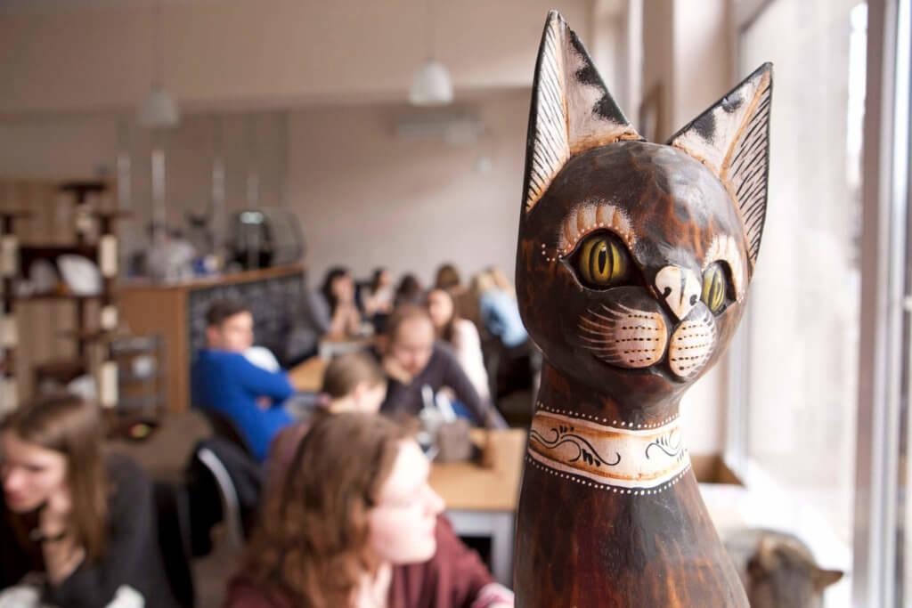 Kawiarnia Kot Cafe